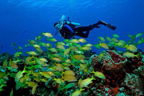 dive cancun